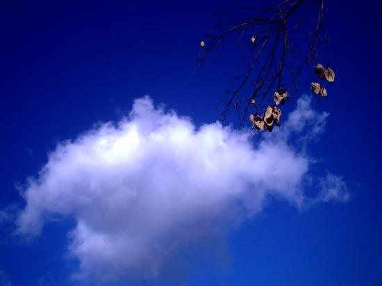 青すぎる空