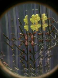花とか撮るとこんな感じです。