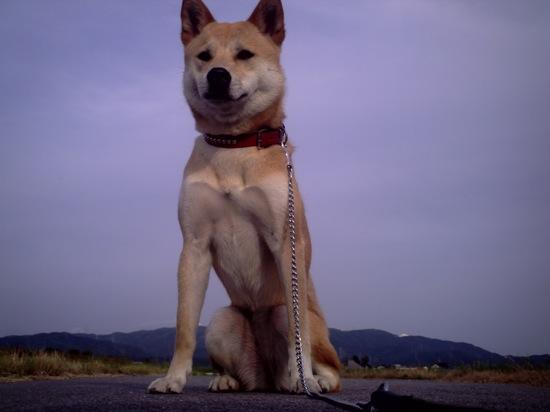 少しだけカメラを上向きにして撮影!なんか巨大犬に見えるんですけど!