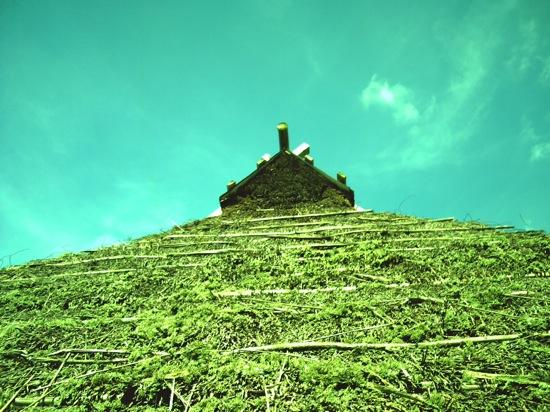 緑に染まった藁葺き屋根