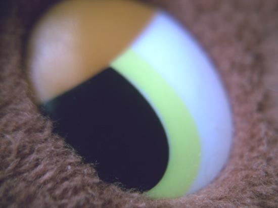 今回はクリップマクロレンズで撮ったロンスタのお友達の目を!