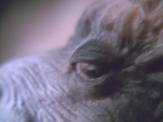 駱駝です。はい。駱駝です。