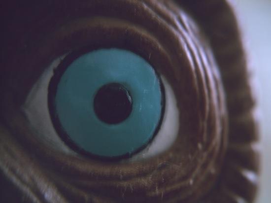 わが家にたくさんいるE.T.の目ですよヽ(´ー`)ノ