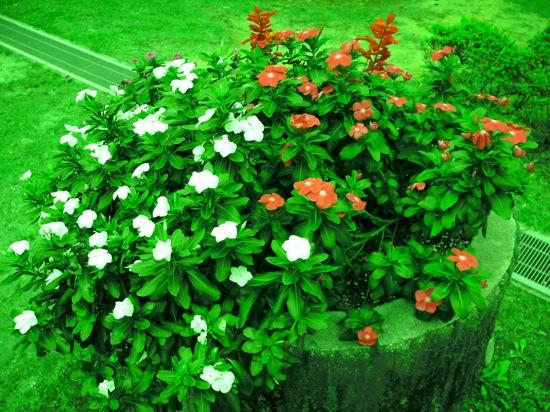 花以外は緑に染まってるどーーーんっ!!!!