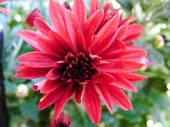 R10で撮った花の色って好きだなー!バキッとしてる感じで!