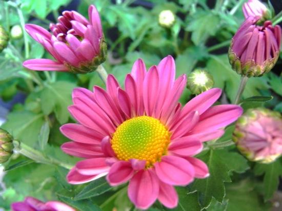 なんかすぐそこに花がありそうな雰囲気で撮れちゃいます。