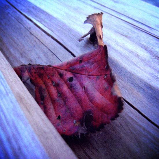 ベンチの落ち葉:RicohR10