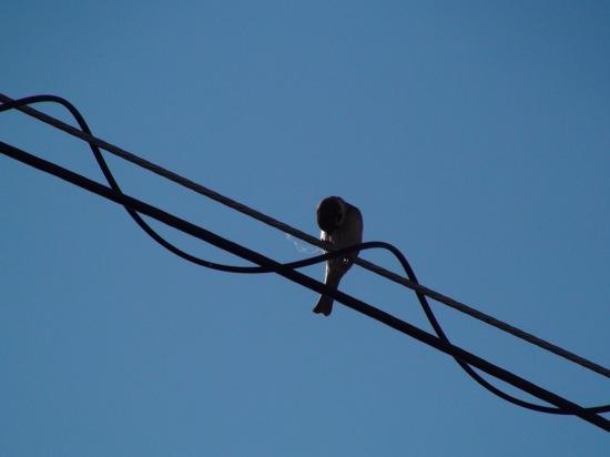 鳥さんも認識してくれません(;´ー`)