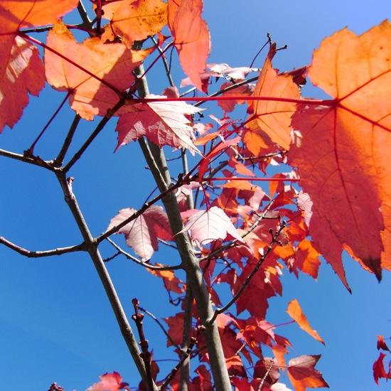 RICOH R10:紅葉を撮ってみた。