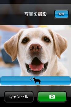 今回使ってみたのはこれ!「犬カメラ」です!