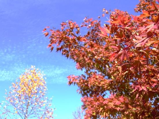空の色も赤く染まった楓もキレイに