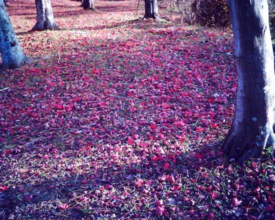 VQ1005:落ち葉