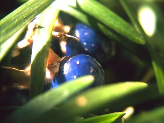 青紫丸(`・ω・´)