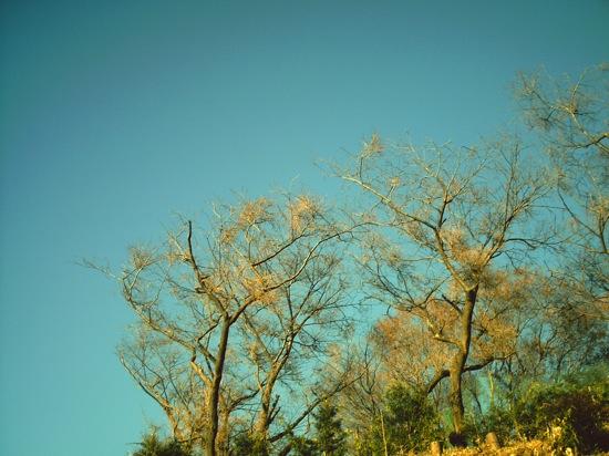 冬のちょっと寒くて青い空