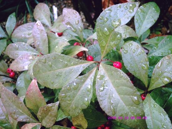 雨上がりの朝。今日の朝撮った写真です。