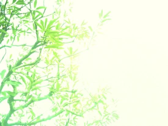 これなんて、、、ほとんど写ってないに等しい写真になっちゃったし(^_^;)