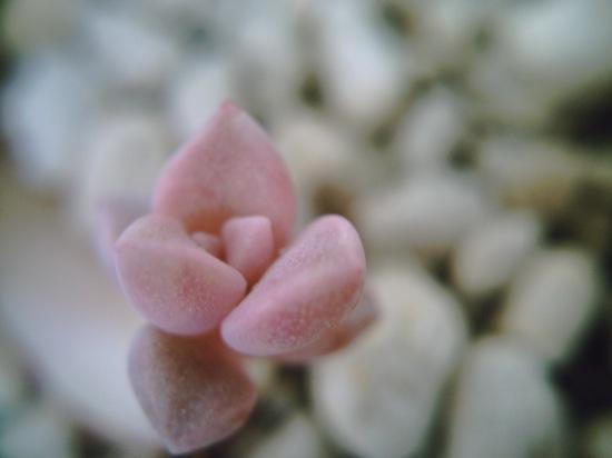ピンクでキャワユイなー♪+゚