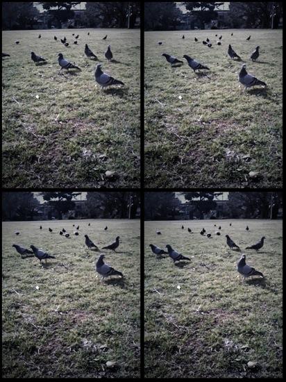 動く被写体を探したら鳩がいましたwwwしかし、、奴らあまり動きません。こうなったら、、、飛ばしてみせよう鳩ぽっぽ!