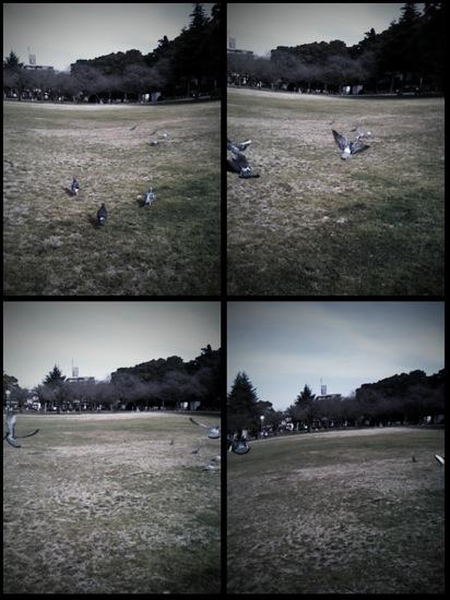 思い切り走って鳩を追いかけながら撮影!そしたら地面がぐにゃぐにゃにwww
