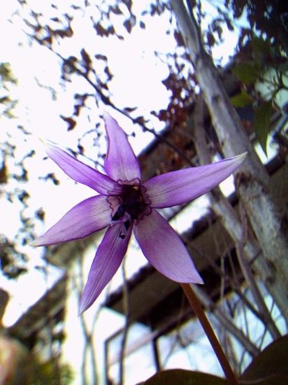 かたくりの花:YASHICA EZ F924