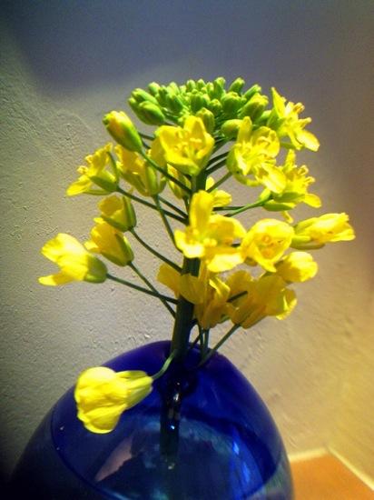 菜の花を一輪挿しに。