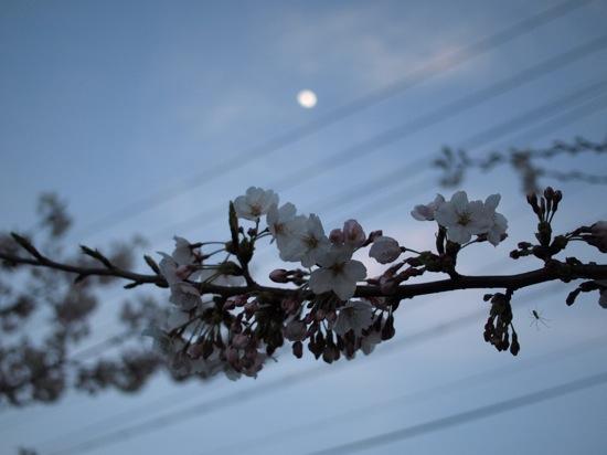 桜・月・蜘蛛