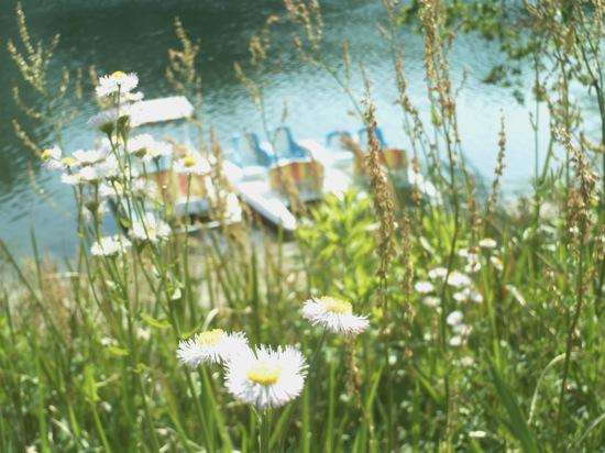 白い花とボート