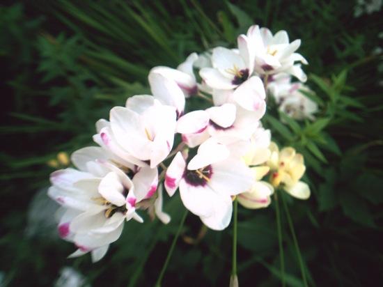 近所に咲いてた花ですヽ(´ー`)ノ