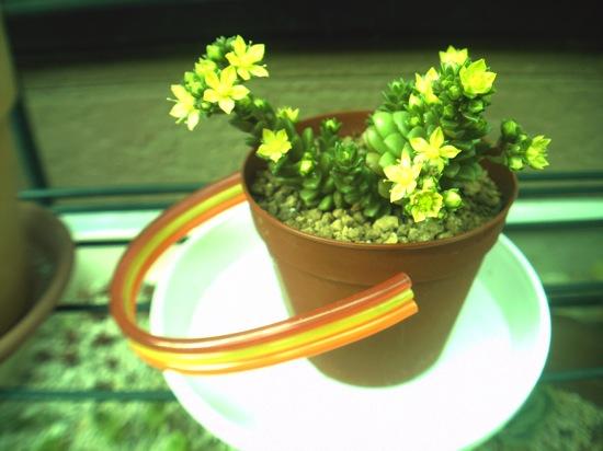 花が咲きました!