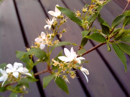 庭に咲いてた花。名前は知らないww
