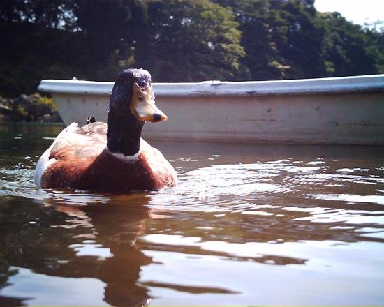 鴨に癒された:VistaQuest VQ-1005
