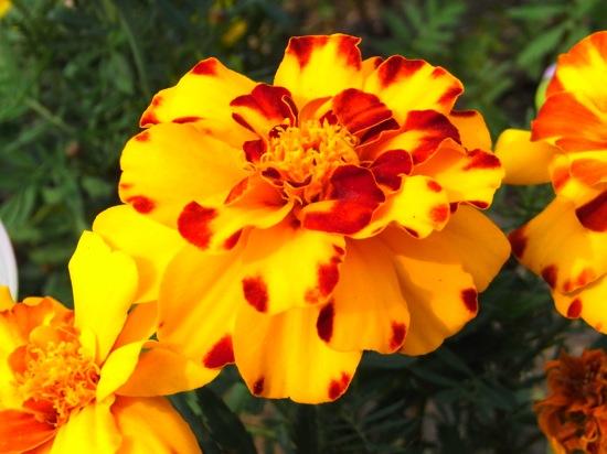 しゃがみながらMY2にグルッと回して花のマクロを撮る!