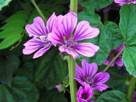 ここでもMY2にして花のマクロを。こっちは明るく派手な雰囲気に。