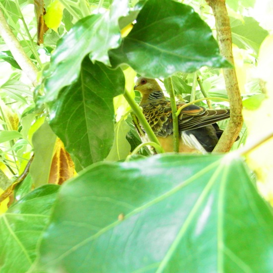 アパートの前の木に巣を作ろうとしていました。