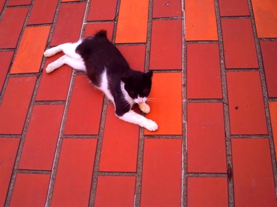 白黒のネコは全て「パンちゃん」と呼ばれます。