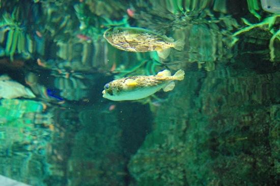 下から見上げた水面に写ってるのがお気に入りです。