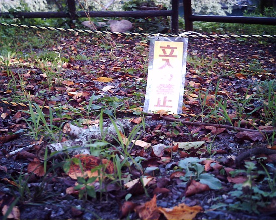 公園内には立ち入り禁止の札がたくさんあります。