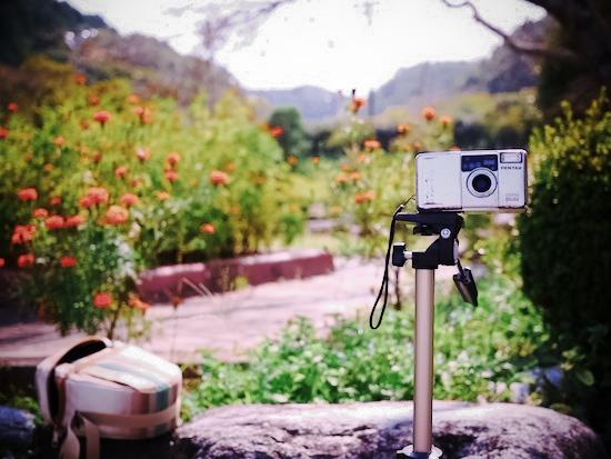 これがSILKYPIXで加工した写真。フィルムカメラ「で」撮った雰囲気になりました!