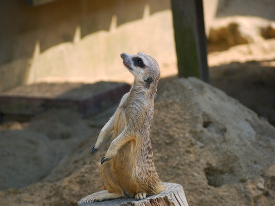 でもやっぱり動物園で写真や動画を撮るなら望遠レンズが便利ですね。