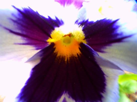 花にレンズが付くほどの接写(マクロで撮影)