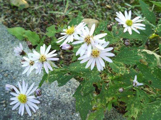 マクロで撮影:左下の花にピントが合っちゃった・・・