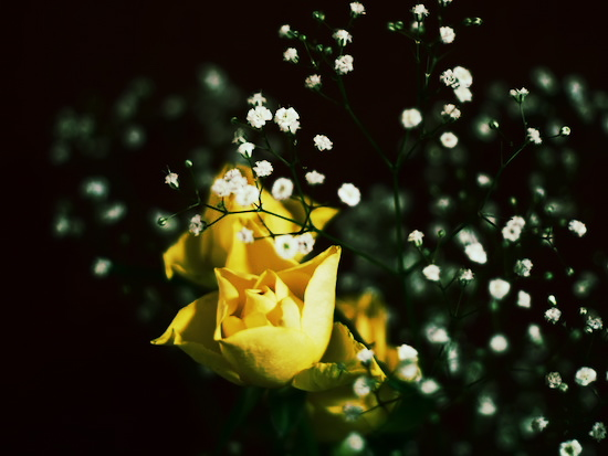 部屋に飾ってあった花を写してみた。