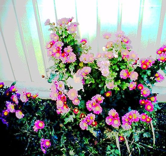 やっぱり花とか撮ると面白い!ノイズっていうか、、花腐ってるでしょ。これ(笑)