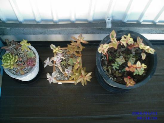 多肉植物とかの写真だったら成長記録的に使える気もします!(2004年だけどw)