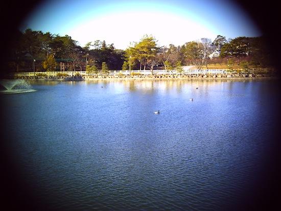 池のカモ:YASHICA EZ F924