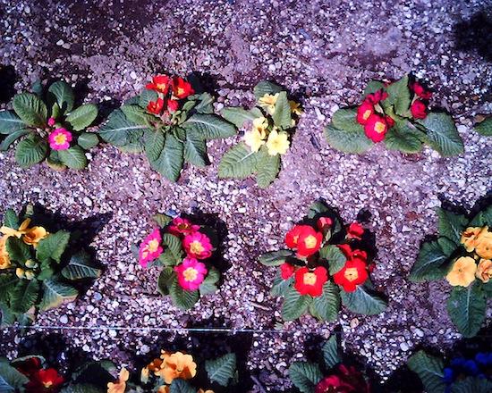 VistaQuest VQ1005:花