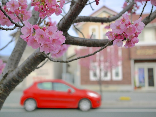 桜と愛車:LUMIX DMC-GF1