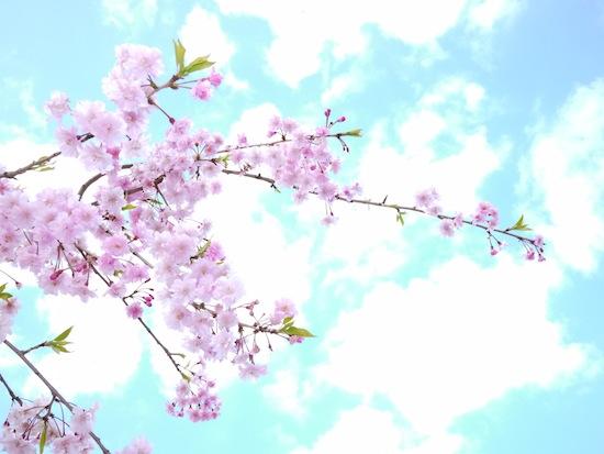 桜とか:LUMIX DMC-GF1