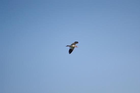 空を飛ぶ鳥。