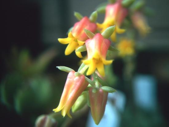 ミニマの花です。キレイな色だなー♪(うっとり)